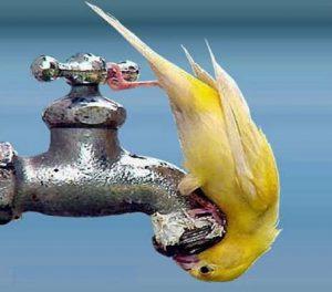 avstengt vann